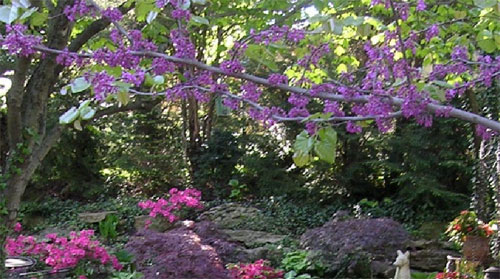 Garden-image1'